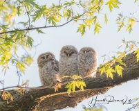 3owls-cropped