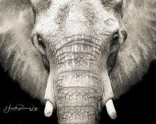 elephant-art-wm