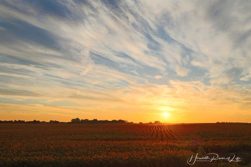 Field-Sunrise