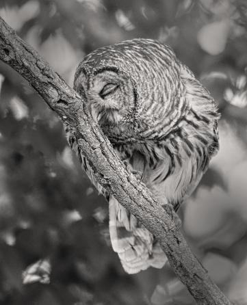 YES Owl 2
