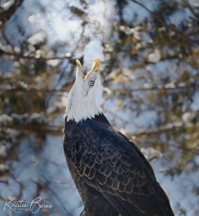 CFCLeeGSimmonsKristie Eagle Breath